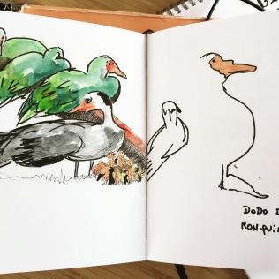 Sketch. USK. Ronquières. Canards