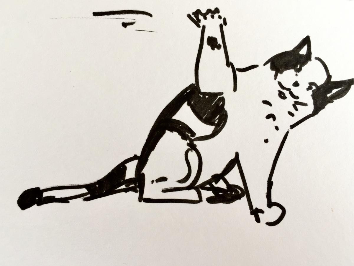 Chat bicolore en mouvement